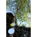 Exemple de miroirs de jardin ronds à accrocher