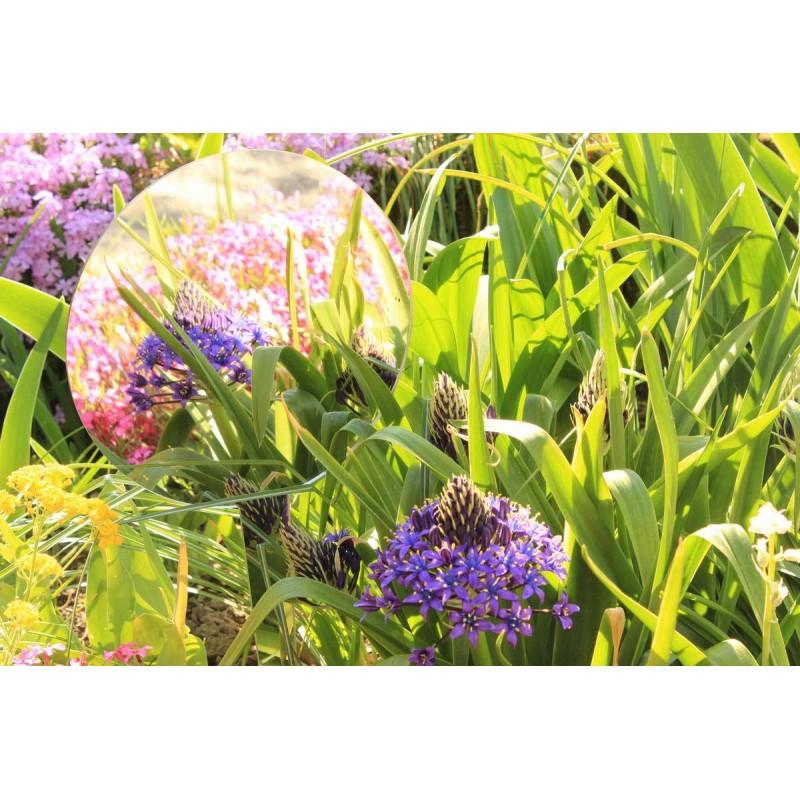 Round mirror to plant